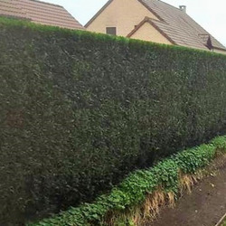 Bati Jardin - Entretien